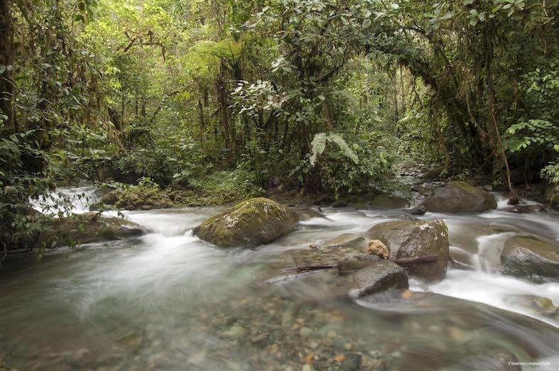 Los Cedros Reserve court date set